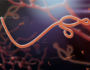 image of Ebola Virus Disease (EVD)