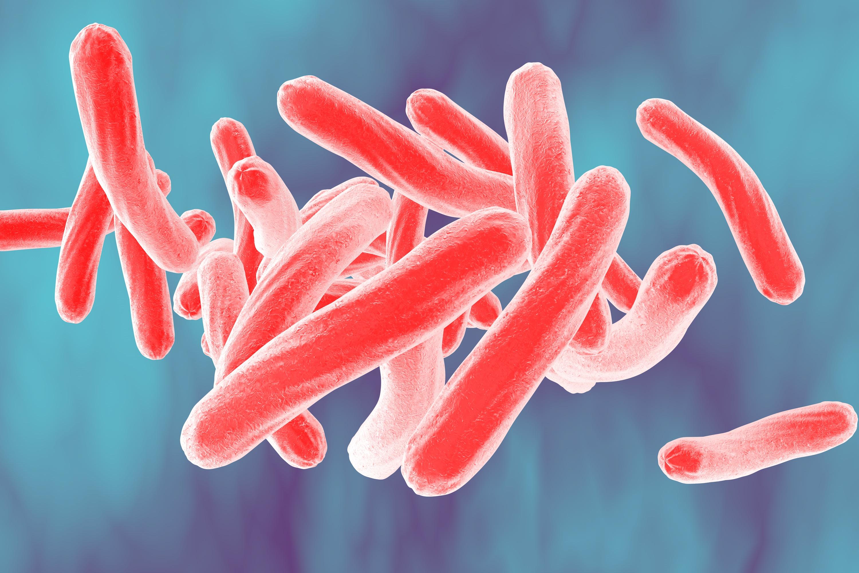 Hasil gambar untuk Mycobacterium Tuberculosis